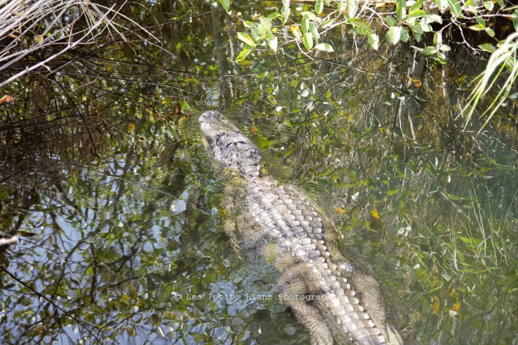 Floride_sept13_Everglades_02