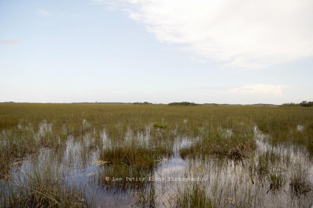 Floride_sept13_Everglades_07