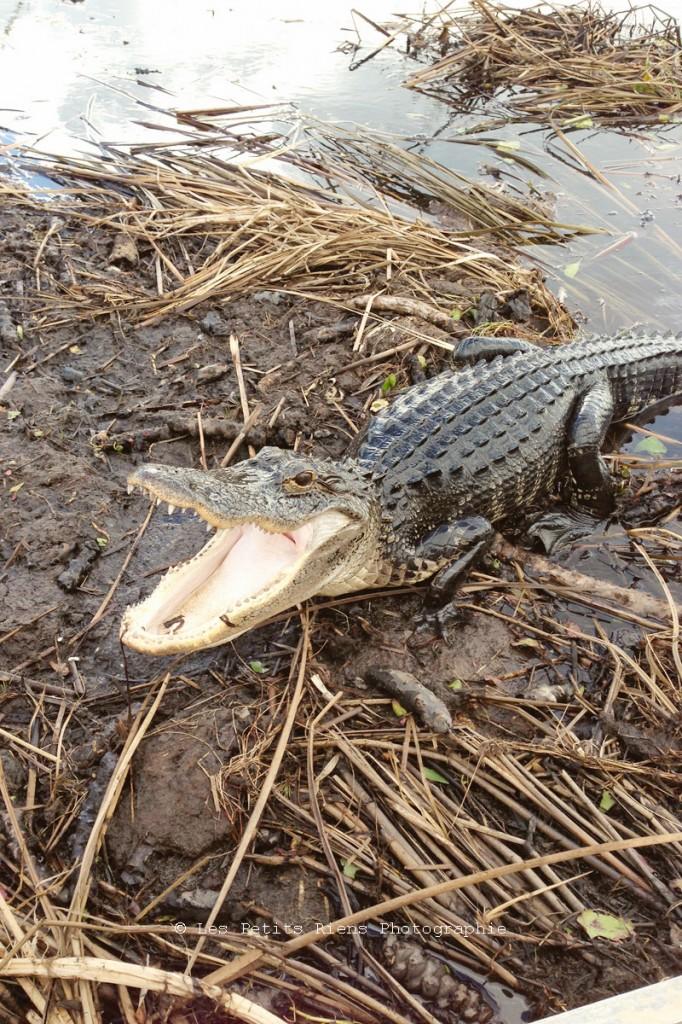 Floride_sept13_Everglades_10