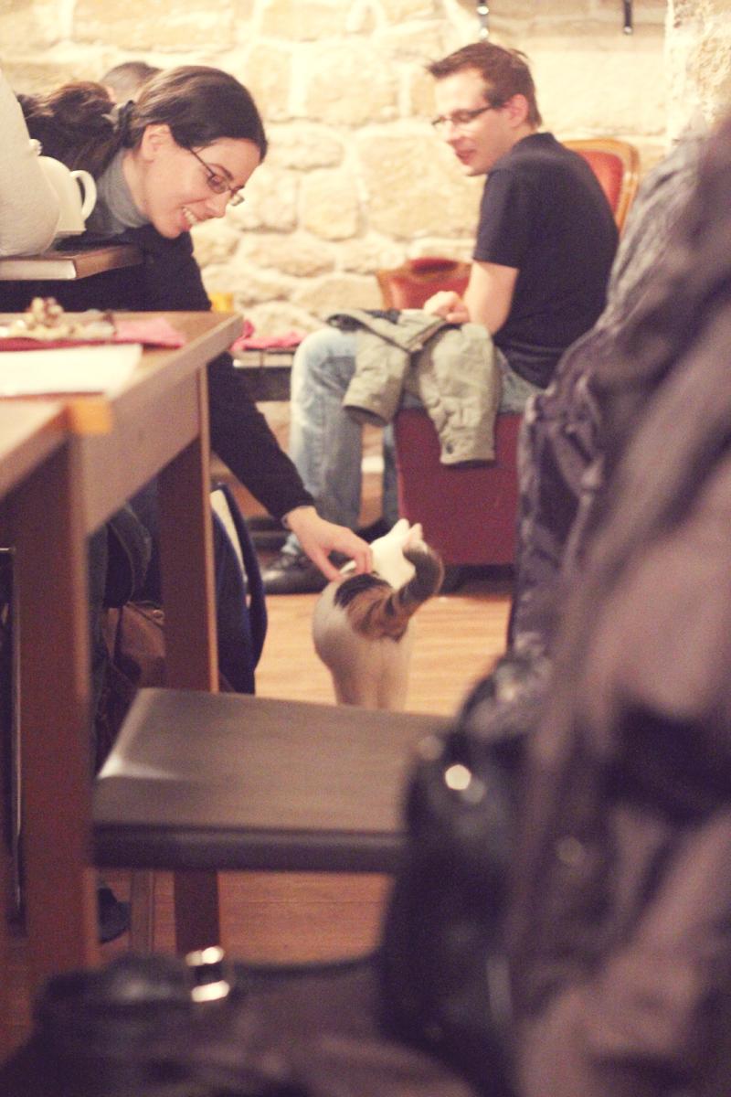 Cafe_des_Chats_11