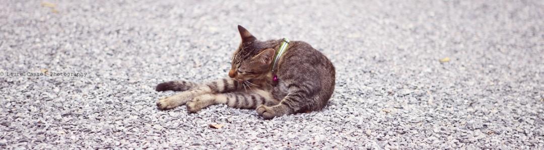 Les Petits Riens Thailande chats