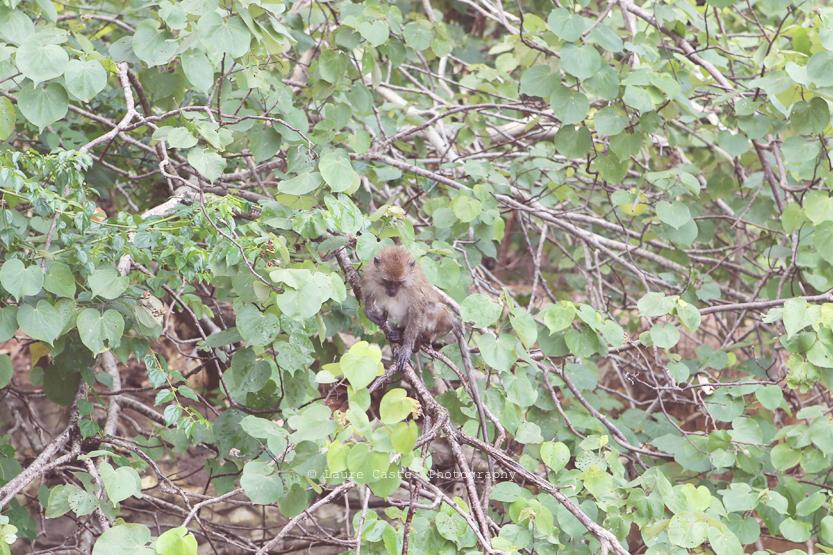 Les Petits Riens Thailande Koh Lanta parc national