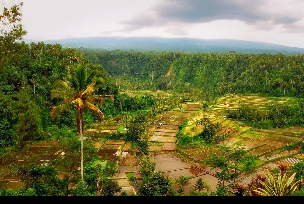 Bali_Momondo-01