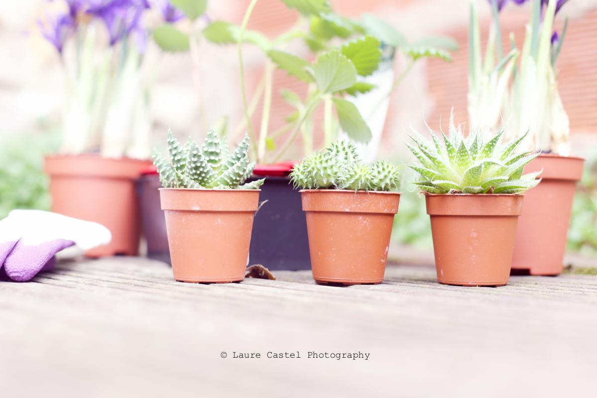 Jardinage magasin Botanic Les Petits Riens avis