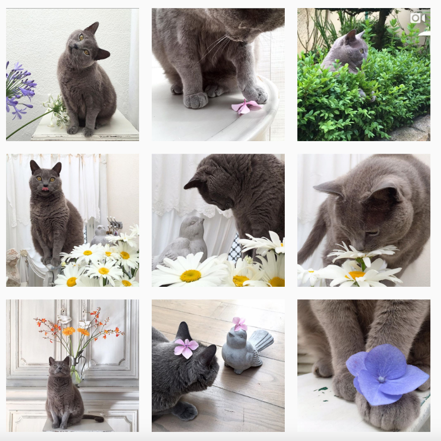Instagram soazigcrenn Basile le chat
