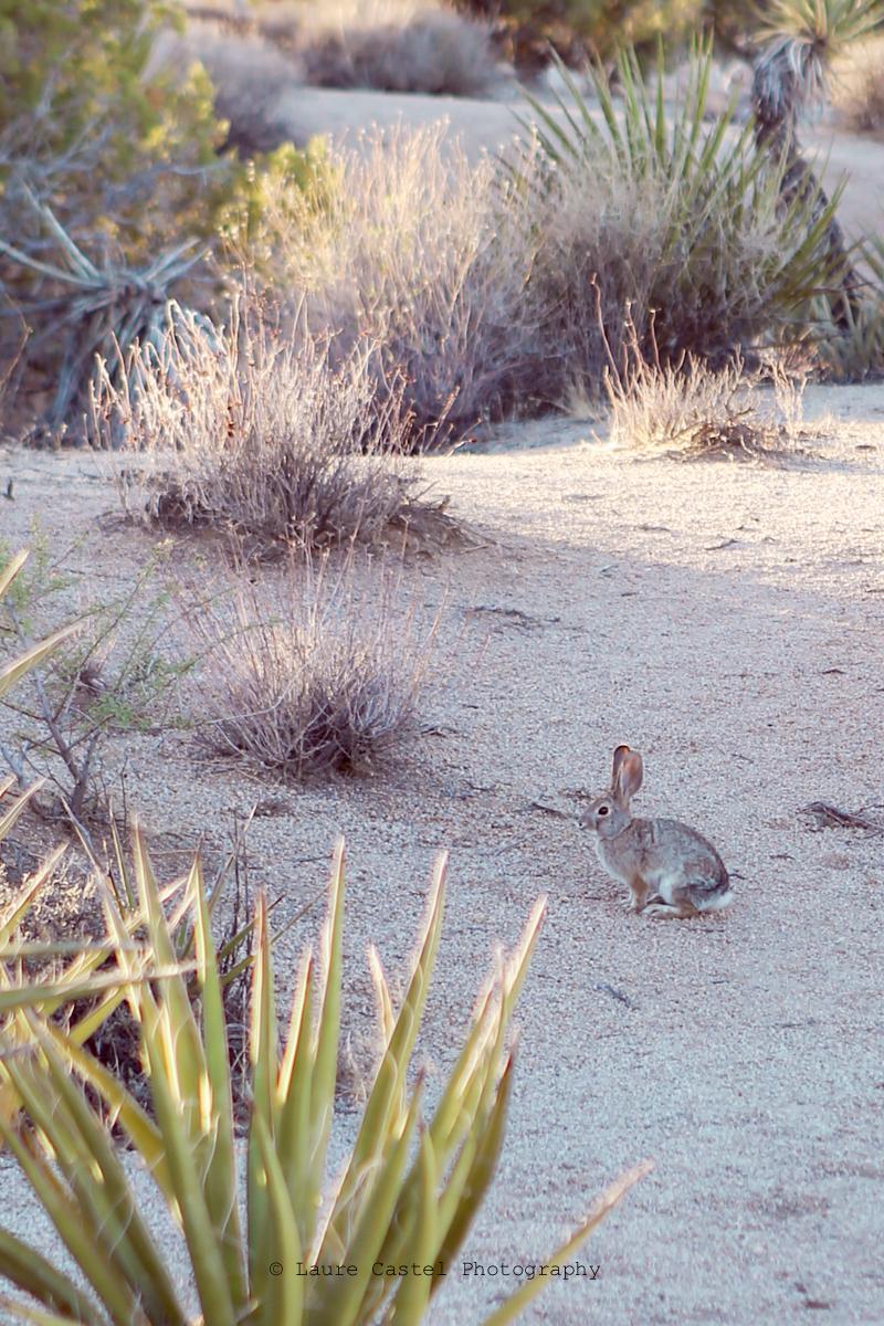 Californie Joshua Tree National Park | Les Petits Riens