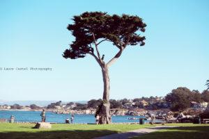 Californie Pacific Grove | Les Petits Riens