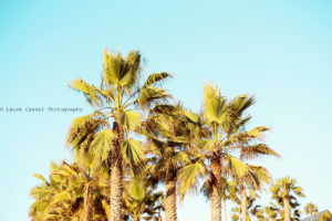 Californie Venice Beach Santa Monica Pier   Les Petits Riens